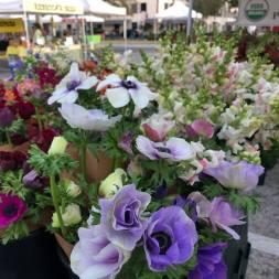 Flowers Market